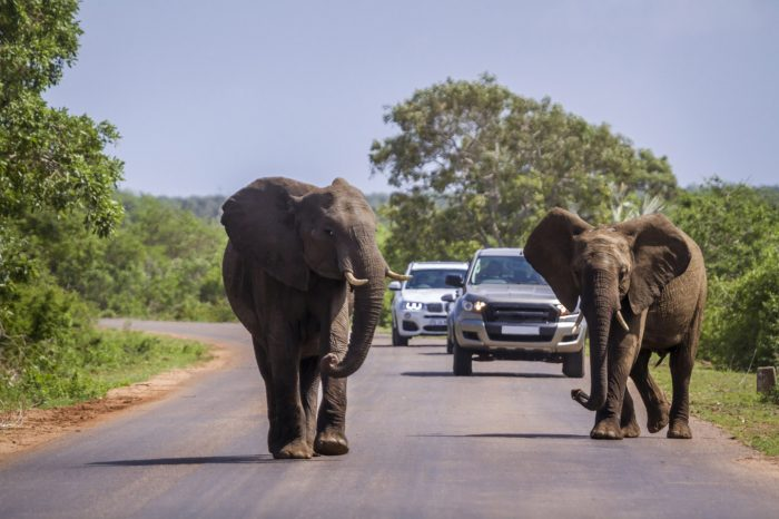 4 DAY VINTAGE KRUGER PARK SAFARI
