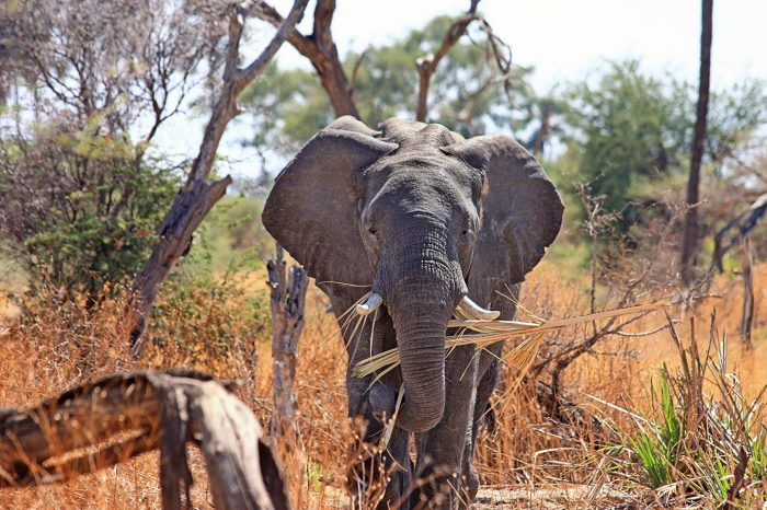 9 DAY KRUGER NATIONAL PARK AND KWAZULU