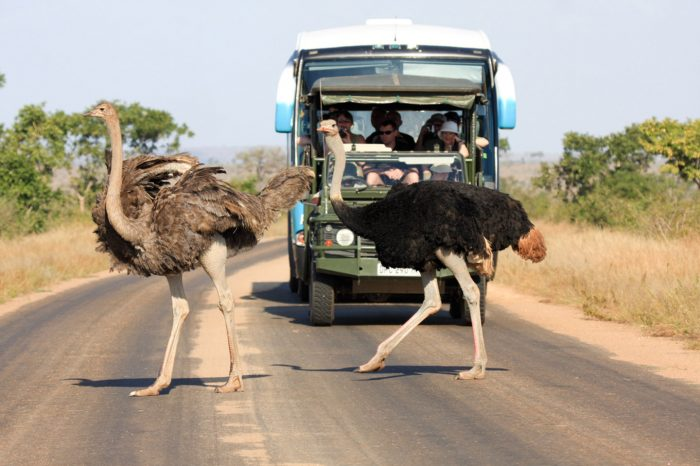 3 DAY VINTAGE KRUGER NATIONAL PARK SAFARI