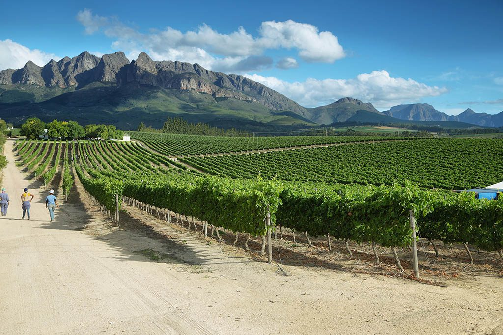 the vineyards cape winelands