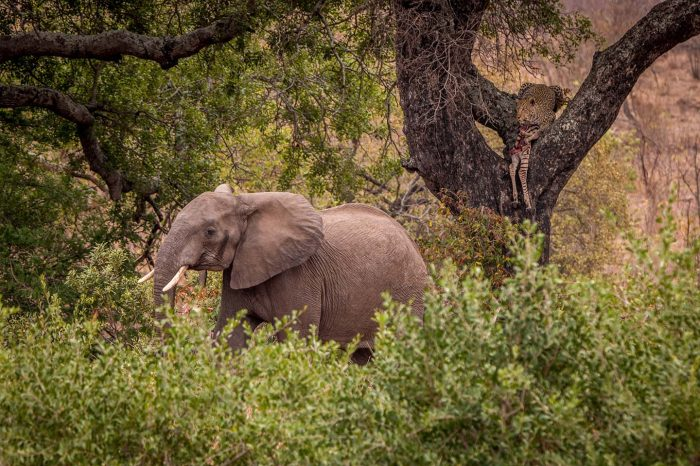 3 DAY MODEST KRUGER PARK SAFARI