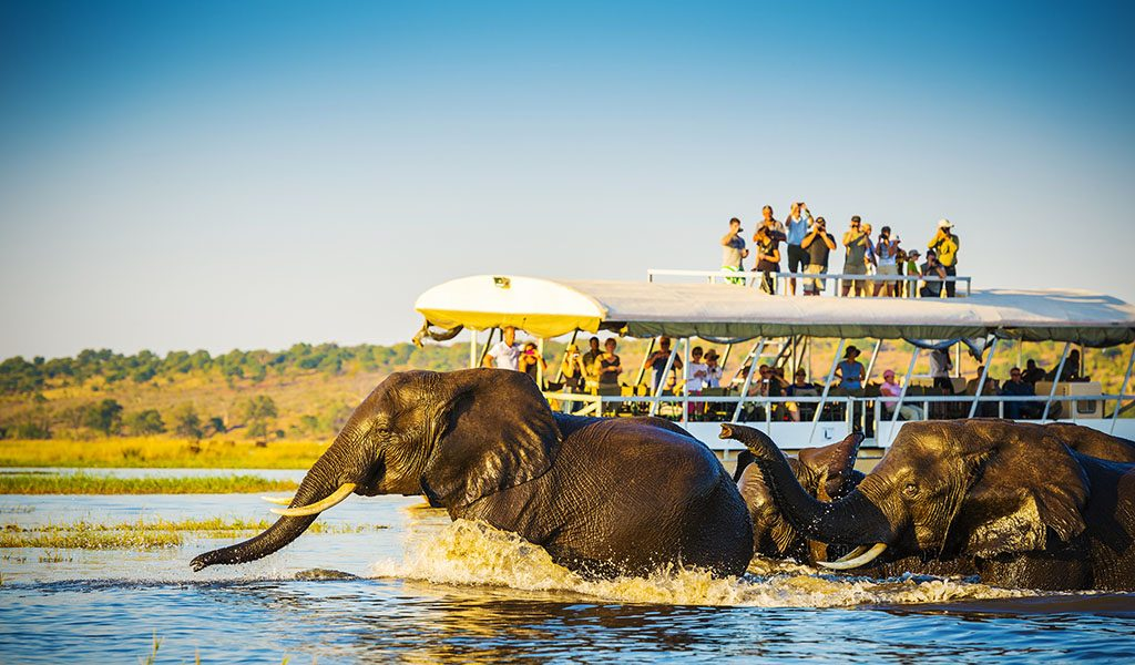 People watch on as African Elephants swim across the Chobe River