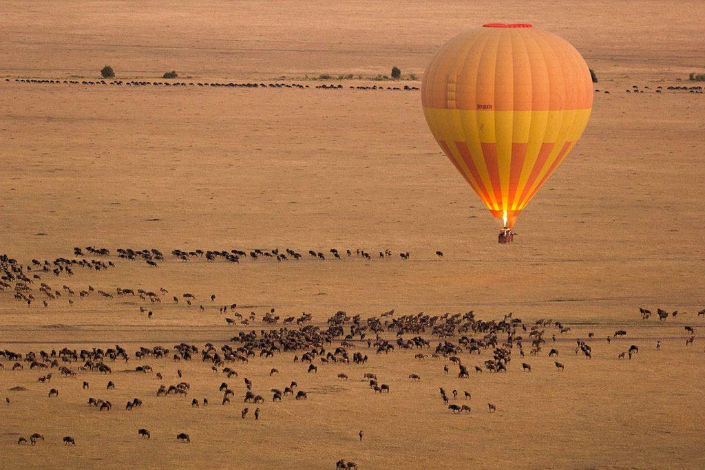 A Hot Air Balloon over the grazing wilderbeest