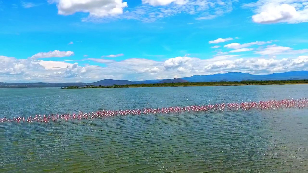 Lake elmenteita watert wonders of Africa