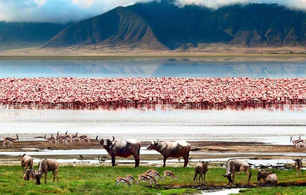 The African wildlife. Beautiful view of Lake in Ngorongoro Crater,