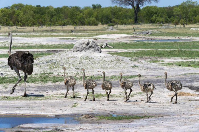 7 DAY HWANGE & VIC FALLS ADVENTURE