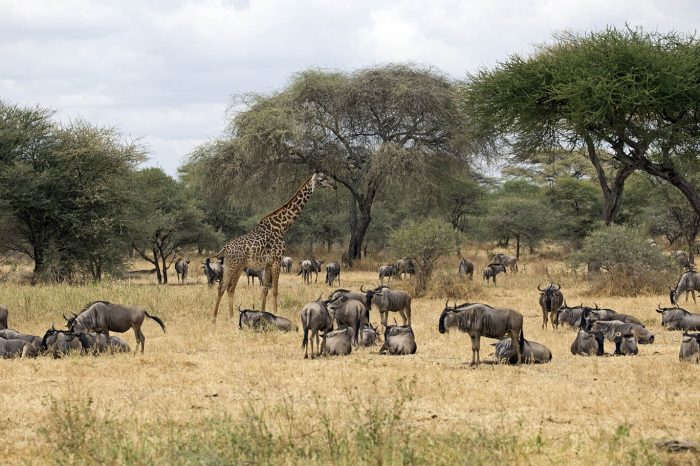 6-DAY AFFORDABLE TANZANIA SAFARI