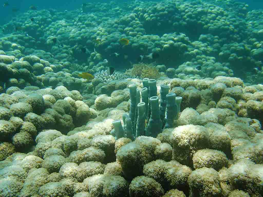 Zanzibar Coral Reef