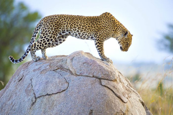 7 DAY OKAVANGO WITH CHOBE AND VIC FALLS