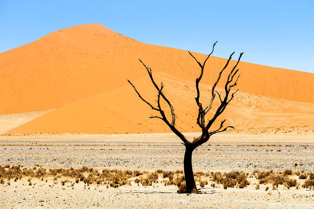 Dead Acacia tree against sand dunes, Namib Naukluft National Park, Sossussvlei,