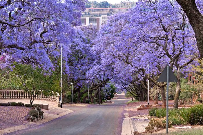 1 DAY PRETORIA TOUR