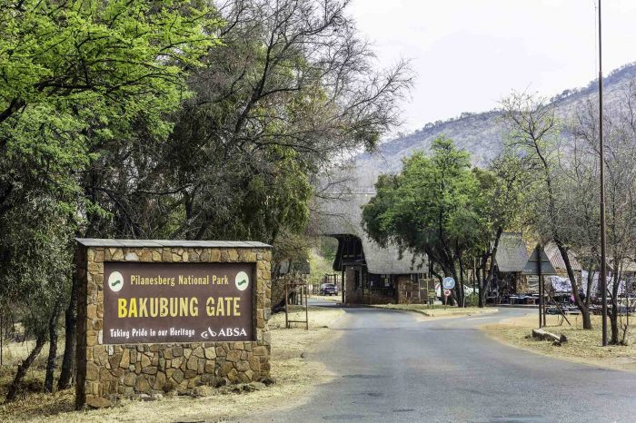 1 DAY PILANESBERG TOUR
