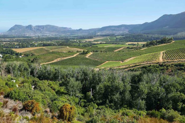 1 DAY STELLENBOSCH WINE TOUR