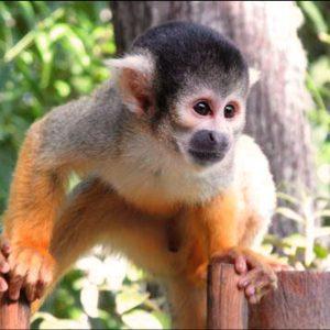 Bush Babies Monkey Sanctuary Monkey In Action